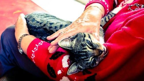 cat cuddling 1