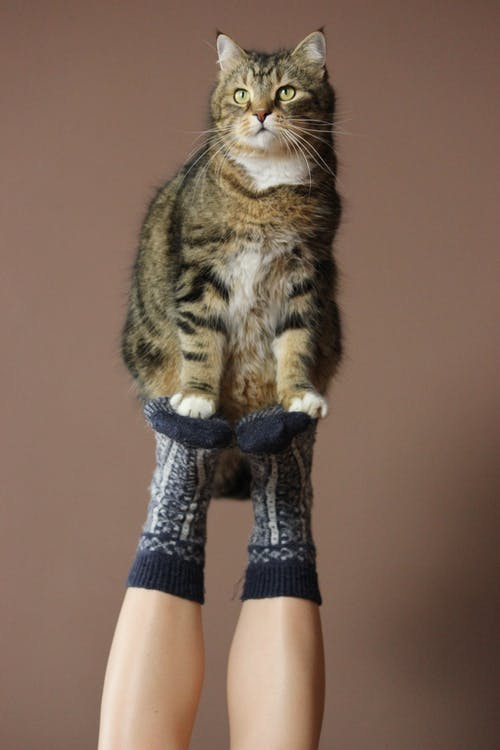 cat with person legs