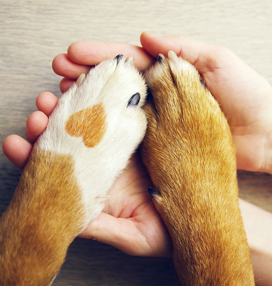 paws-and-hands